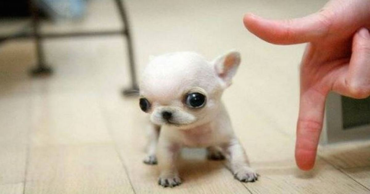 5 44.jpg?resize=1200,630 - 21 Adorable Dogs That Stole Our Hearts