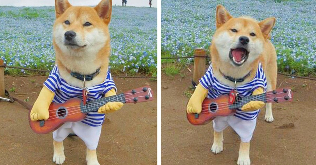 6 97.jpg?resize=1200,630 - 20 Reasons to Madly Fall in Love With Shiba Inu Dogs