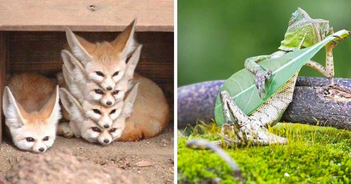 7 111.jpg?resize=1200,630 - 17 Bilder Von Tieren An Der Perfekten Zeit Fotografiert
