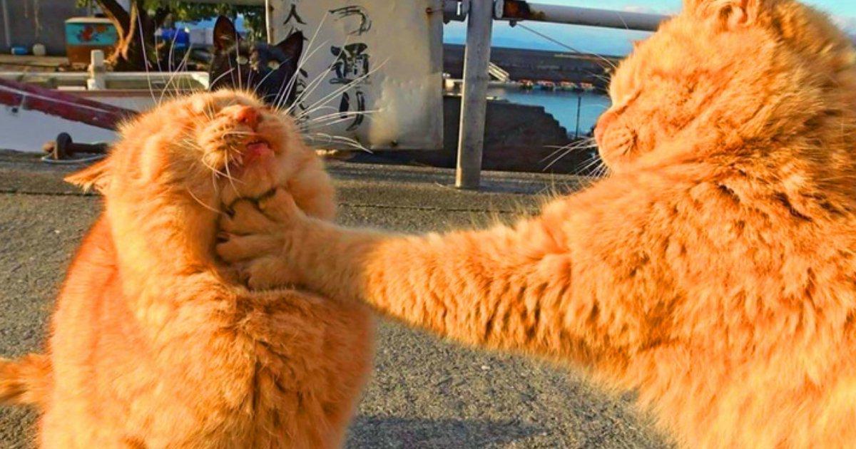 7 116.jpg?resize=1200,630 - 19 Imágenes que demuestran que hasta los animales mienten en las redes sociales