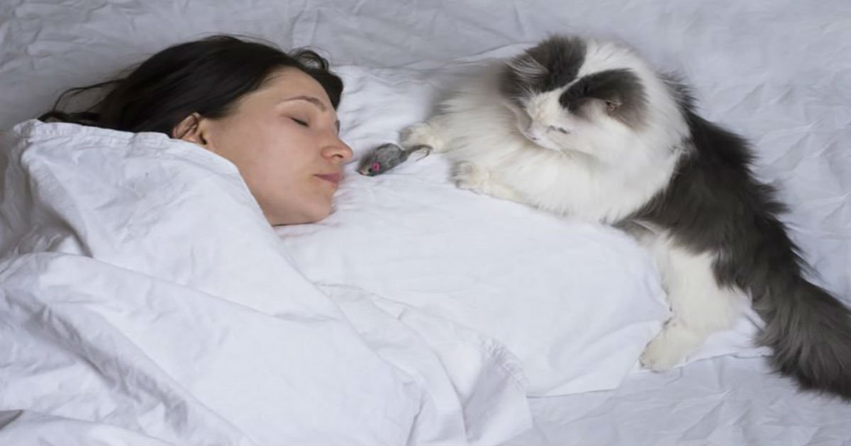 7 5.jpg?resize=1200,630 - PETS  8 Reasons You Should Never Let Your Cat Sleep in Your Bed