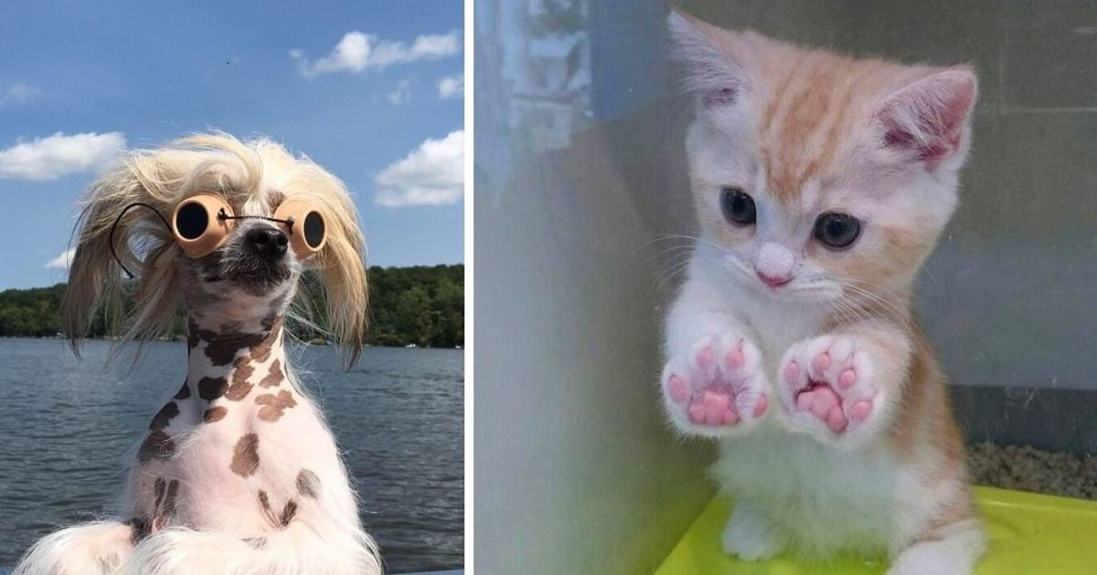 7 92.jpg?resize=1200,630 - 20+ Heartwarming Animal Photos To Brighten Your Mood If You're Having A Tough Day