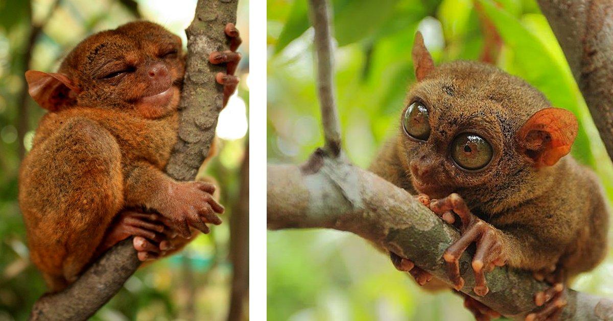 8 121.jpg?resize=1200,630 - Los 20 animales más raros del mundo