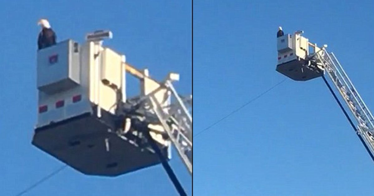 911 tribute.jpg?resize=648,365 - Bald Eagle Landed On A Fire Truck And Joined The 9/11 Tribute In Minnesota