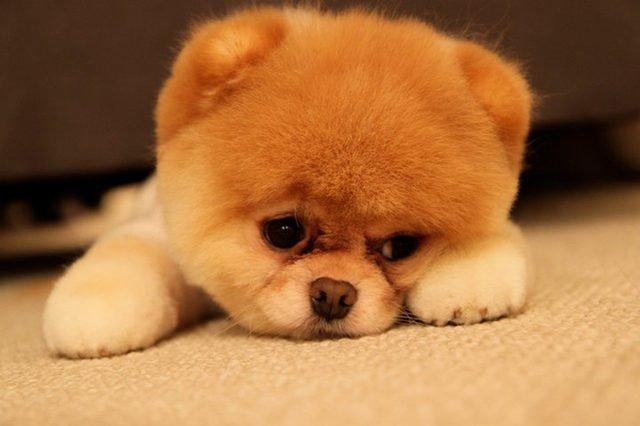 Sad looking puppy!