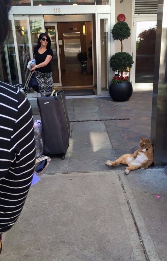 Cat sitting outside fancy hotel