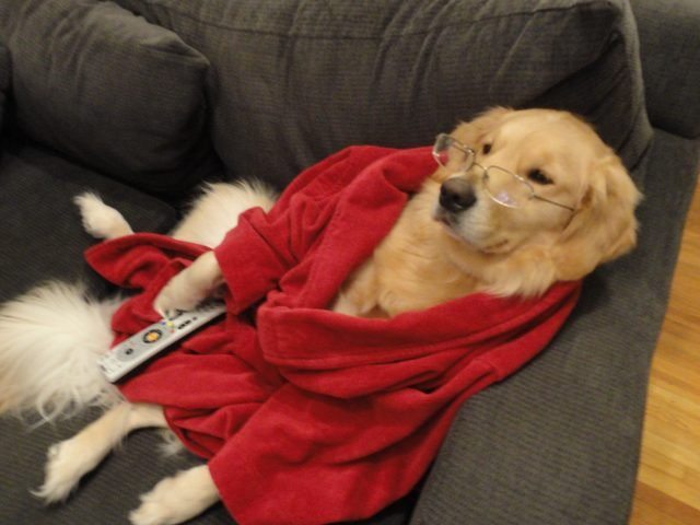 Dog lounging on couch in robe with remote.