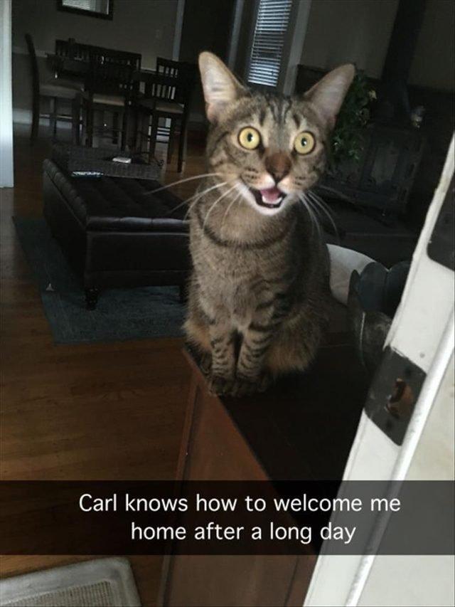 Nice cat saying hello