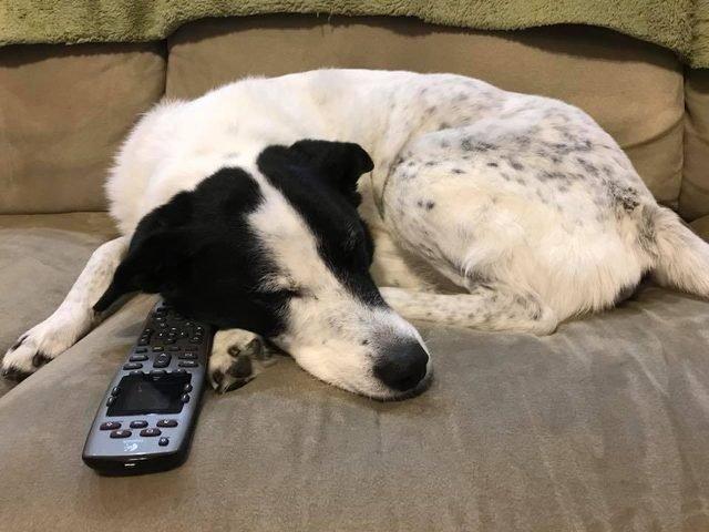 Dog sleeping by remote