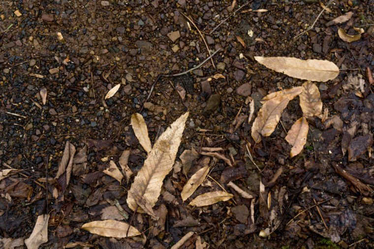 Dead Dirt Leaves Forest Texture