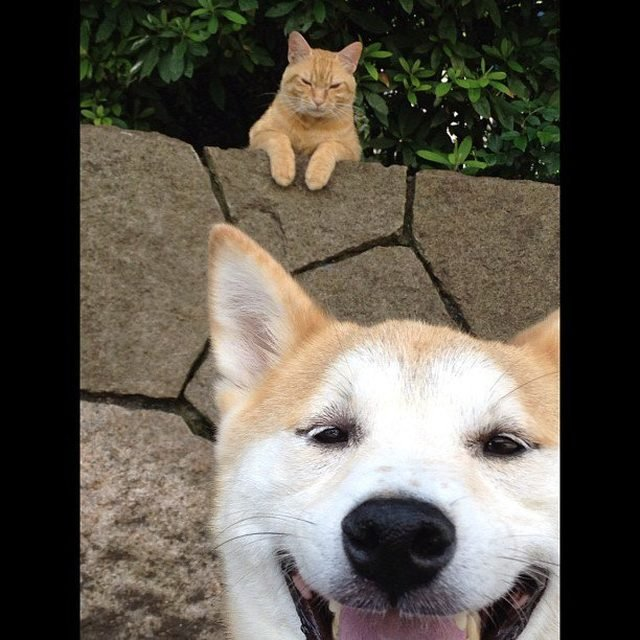 Angry cat photobombing picture of happy dog.