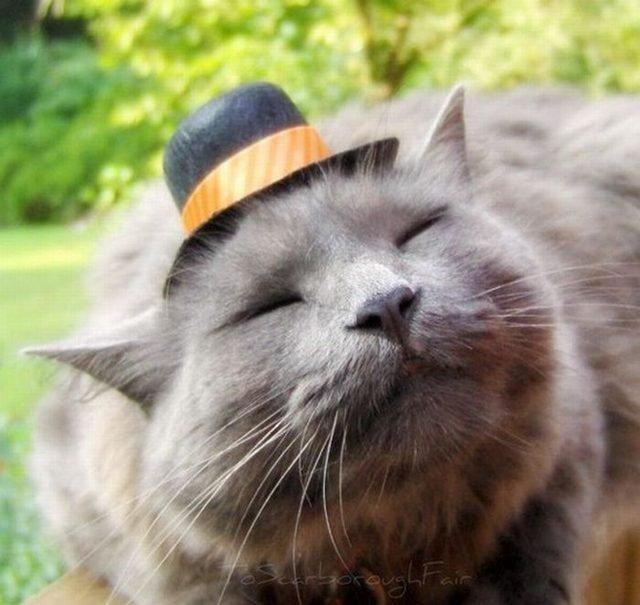 Cat wearing bowler hat.