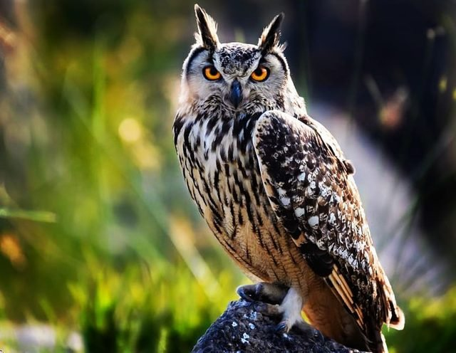 Just 19 of the cutest owls to ever owl
