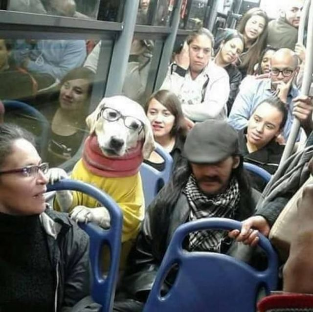 Dog on the subway wearing a sweater and glasses