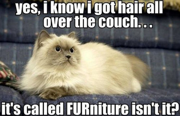 21 Cat Logic Photos - FURniture...of course!