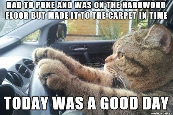 21 Cat Logic Photos - A good day indeed.
