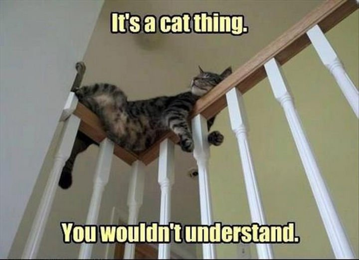 21 Cat Logic Photos - Cats will sleep anywhere.