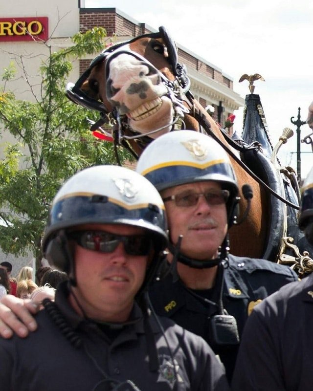 Grinning horse behind two policemen.