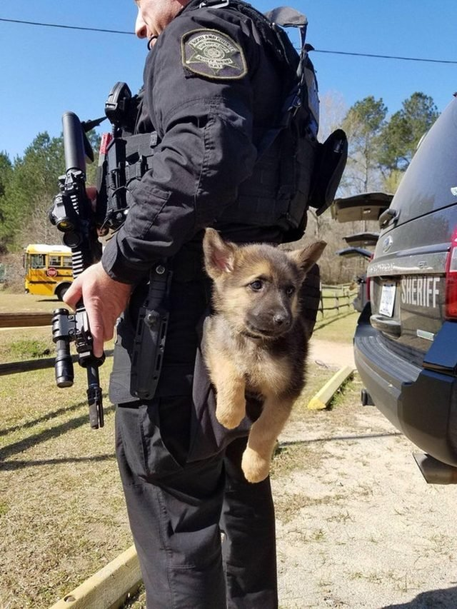 Puppy hanging from back of police officer