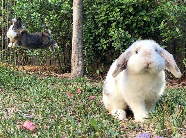 Rabbit mid-jump.
