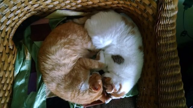 Two cats sleeping with their heads pressed together.