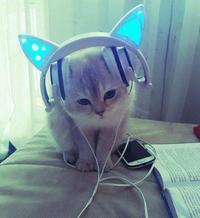 Kitten with cat ear headphones