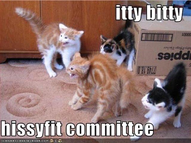 Kittens hissing.