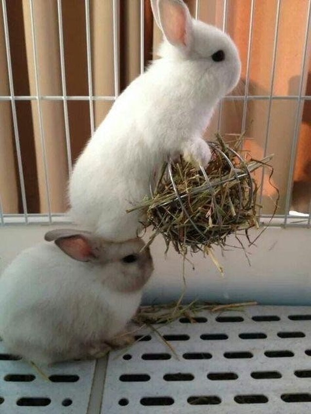 Rabbit standing on other rabbit