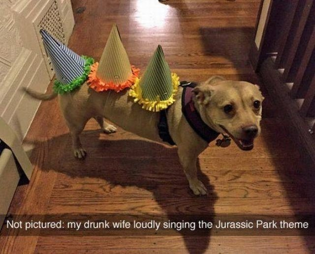 Dog wearing birthday hats like he