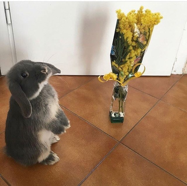 Rabbit next to a bouquet of flowers.