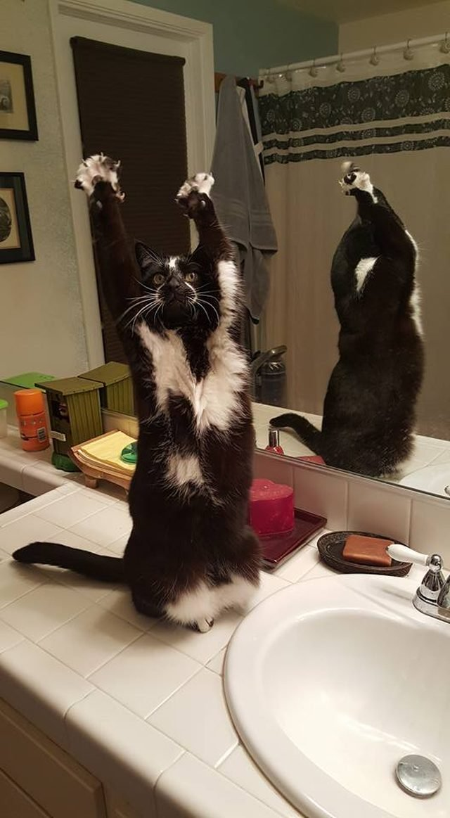 Cat stretching in bathroom