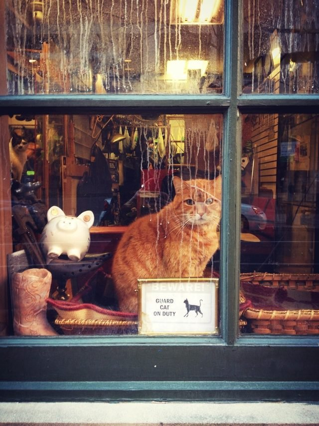 "Cat in a window with a sign that says ""Guard cat on duty."""