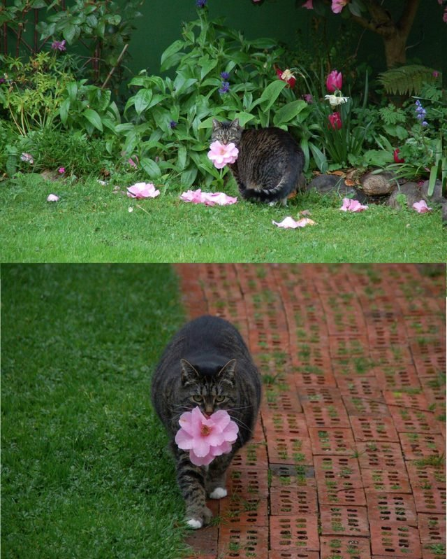 Cat fetching a flower.
