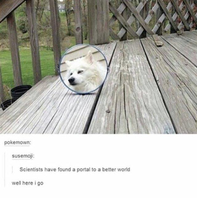 Reflection of a dog sleeping peacefully