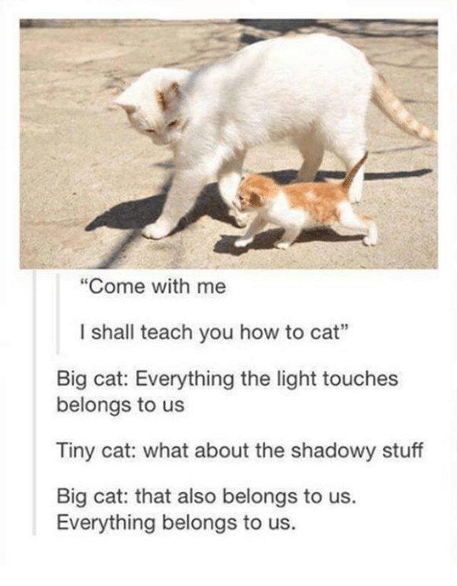 Cat walking with kitten.