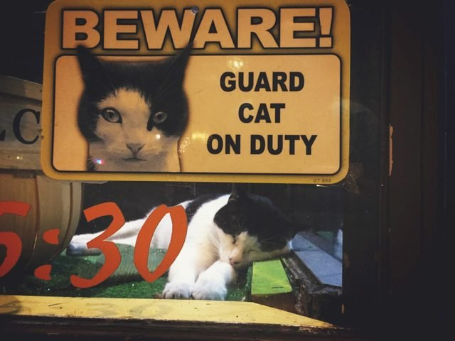 "Cat asleep in a window with a sign that says ""Beware! Guard cat on duty."""