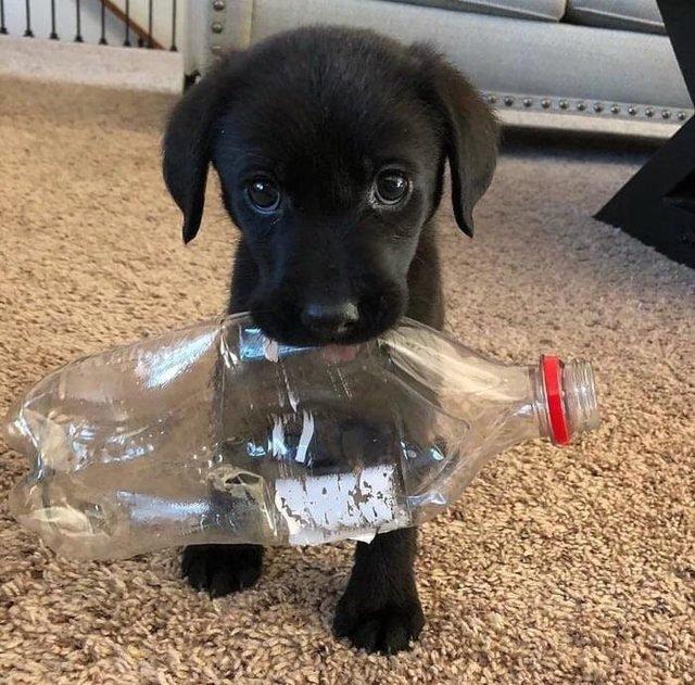 Puppy holding empty plastic bottle.