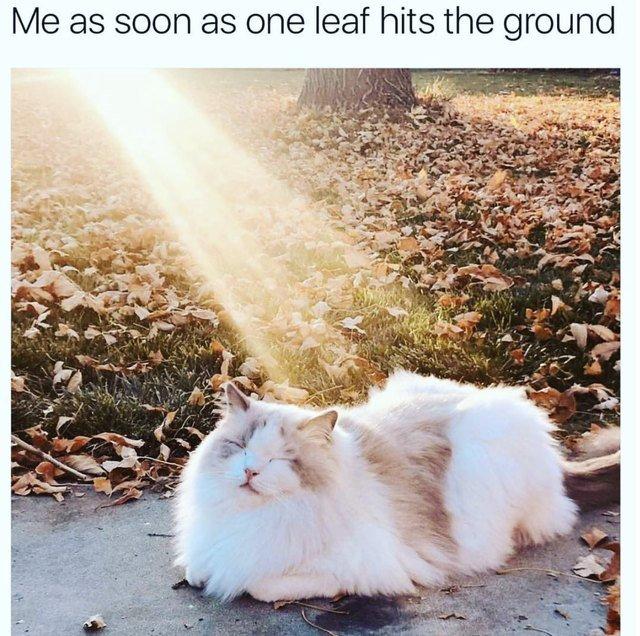 Cat in a sunbeam in fall