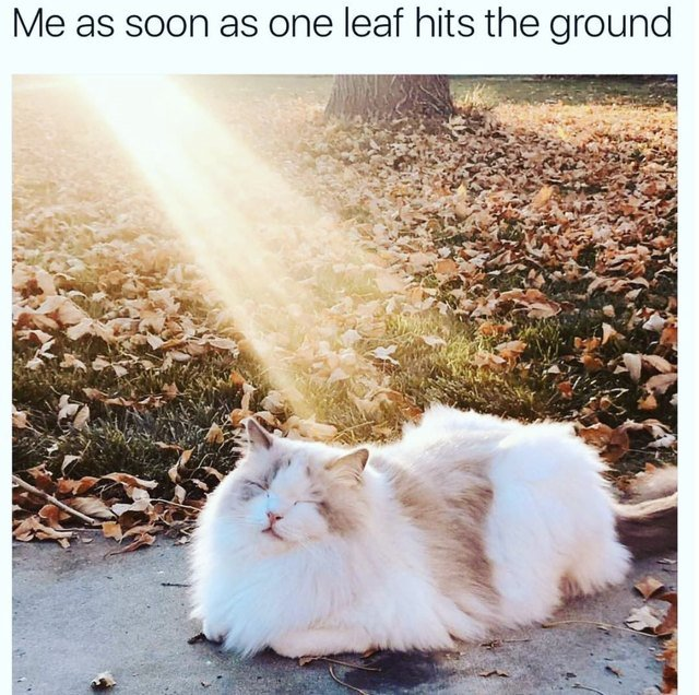 Cat in a sunbeam in fall