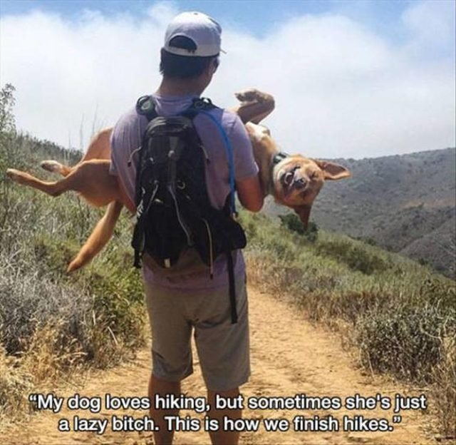 Dog getting carried on a hike and smiling
