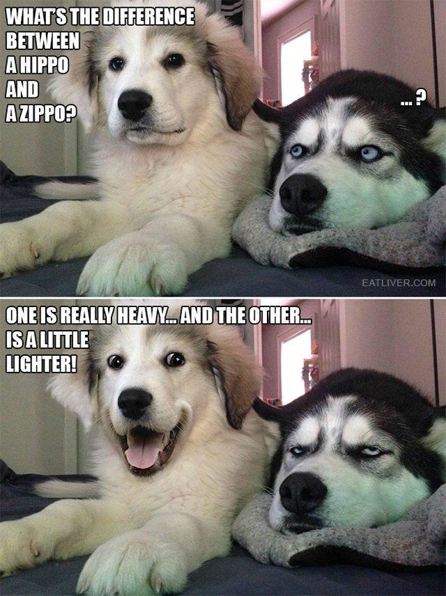 Dog telling a pun.