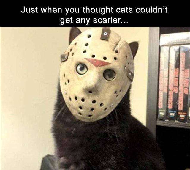 Cat in Jason mask