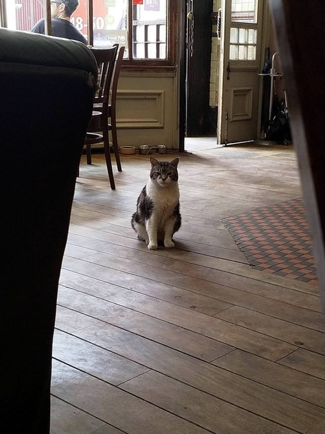 Cat sitting on floor of pub.