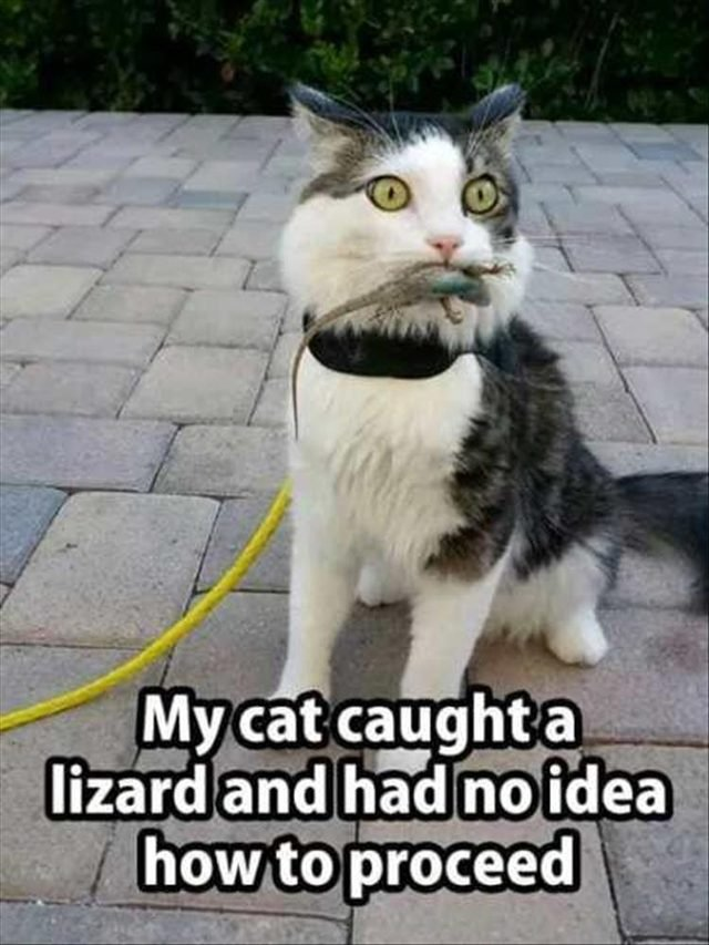 Cat surprised it caught a lizard