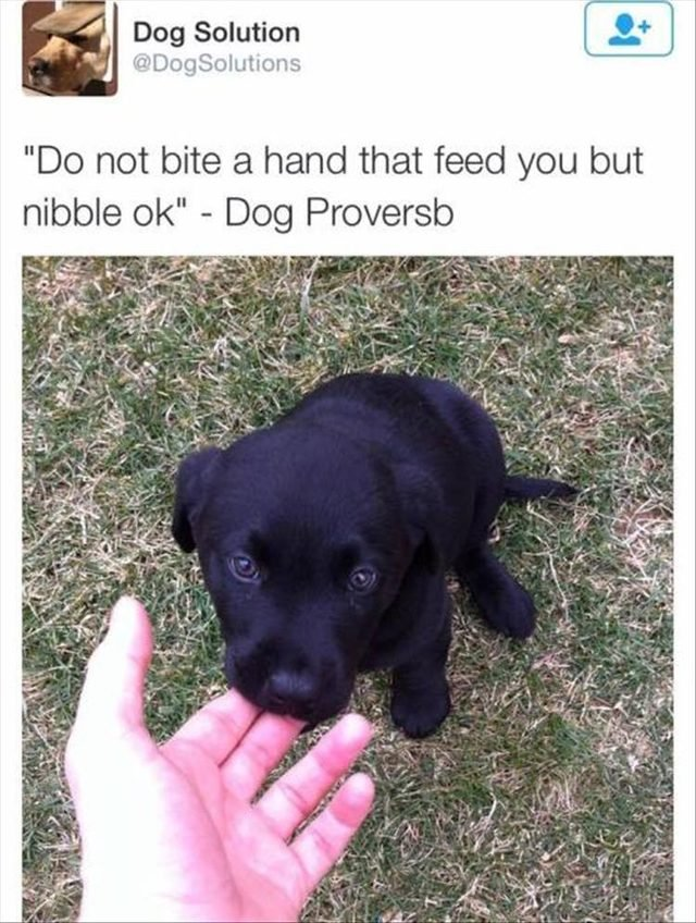 Cute puppy nibbling on fingers.