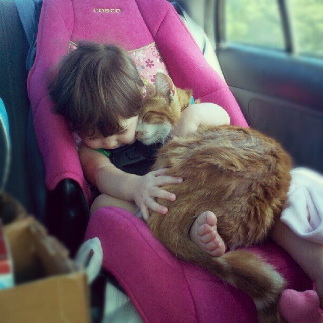 Cat and baby cuddling in a car seat.