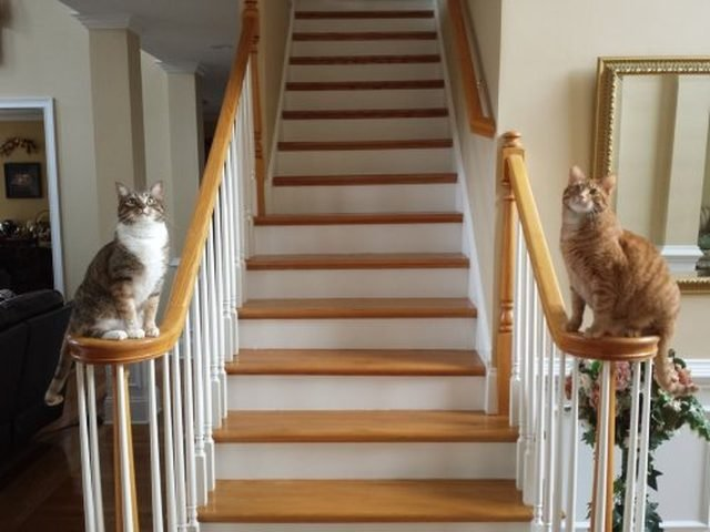 Cats sitting on opposite sides of stair railing.