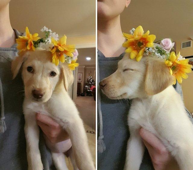 Puppy wearing a flower crown.