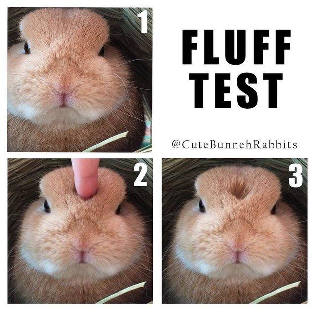 "Fluffy rabbit undergoes ""fluff test."""