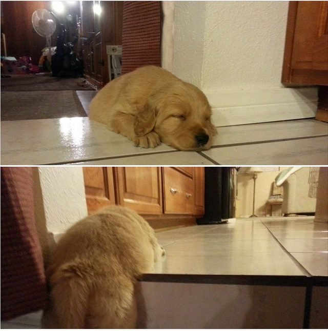 Puppy napping on stairs.